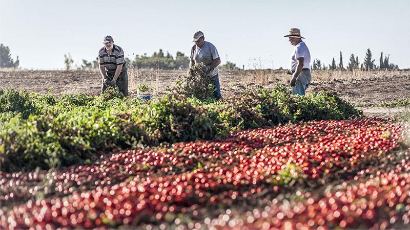 contadini a lavoro in campagna
