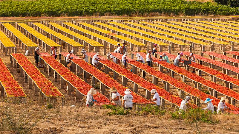 Spacco pomodori al sole