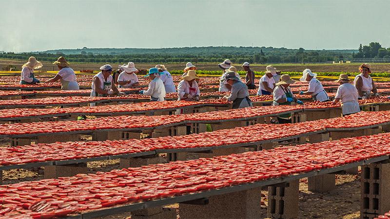 Spacco e salatura dei pomodori