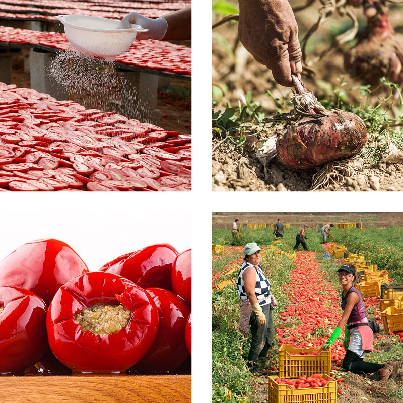 Scene di lavoro in campagna