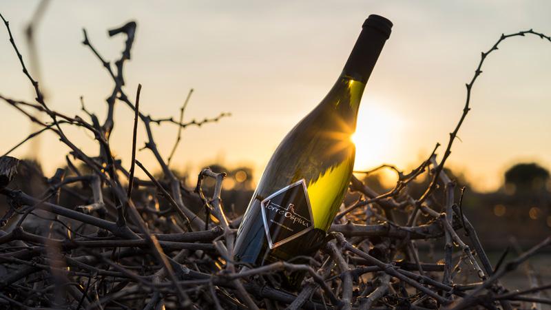 foto bottiglia di vino